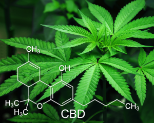 Compounds of Cannabis