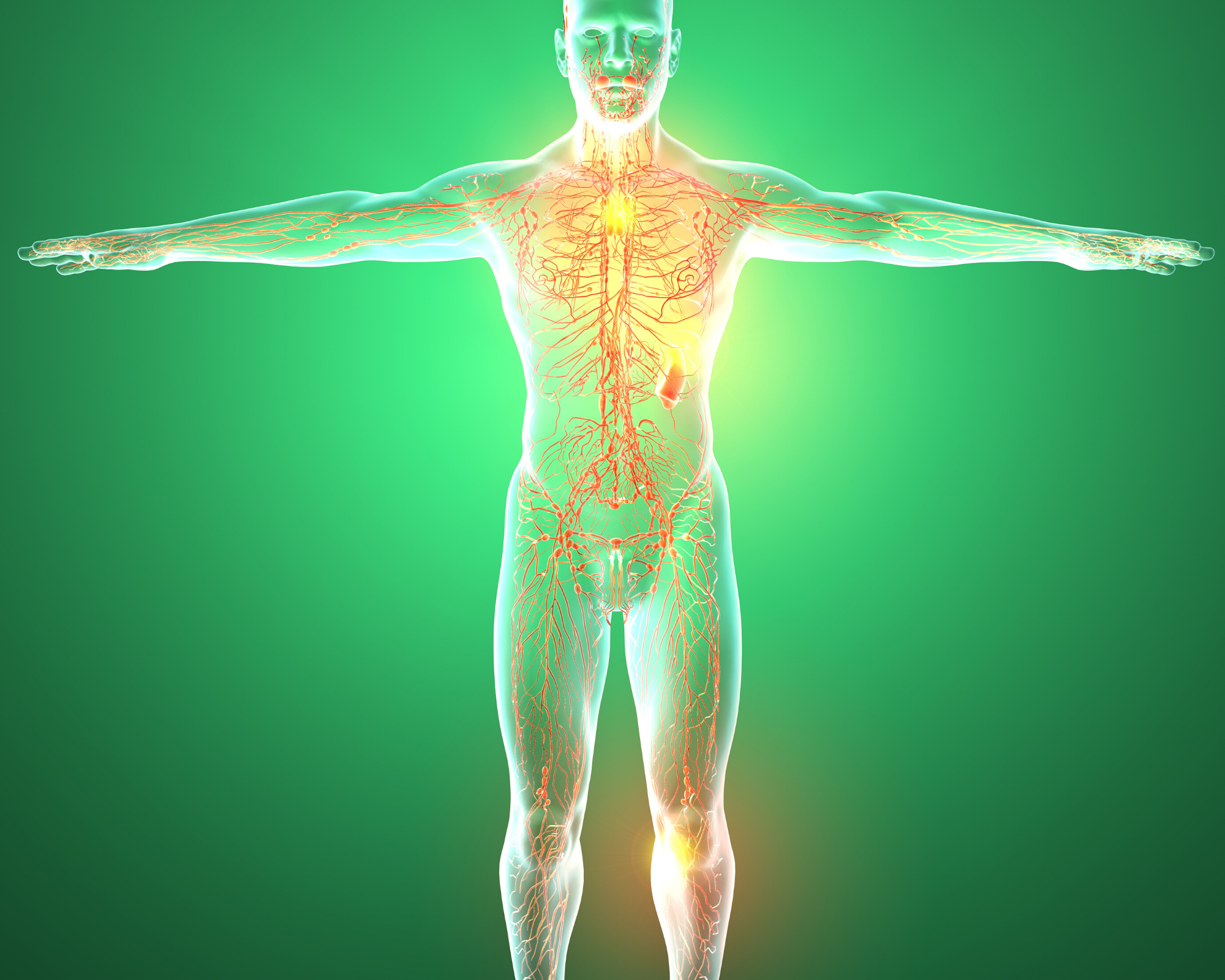 You are currently viewing The Endocannabinoid System