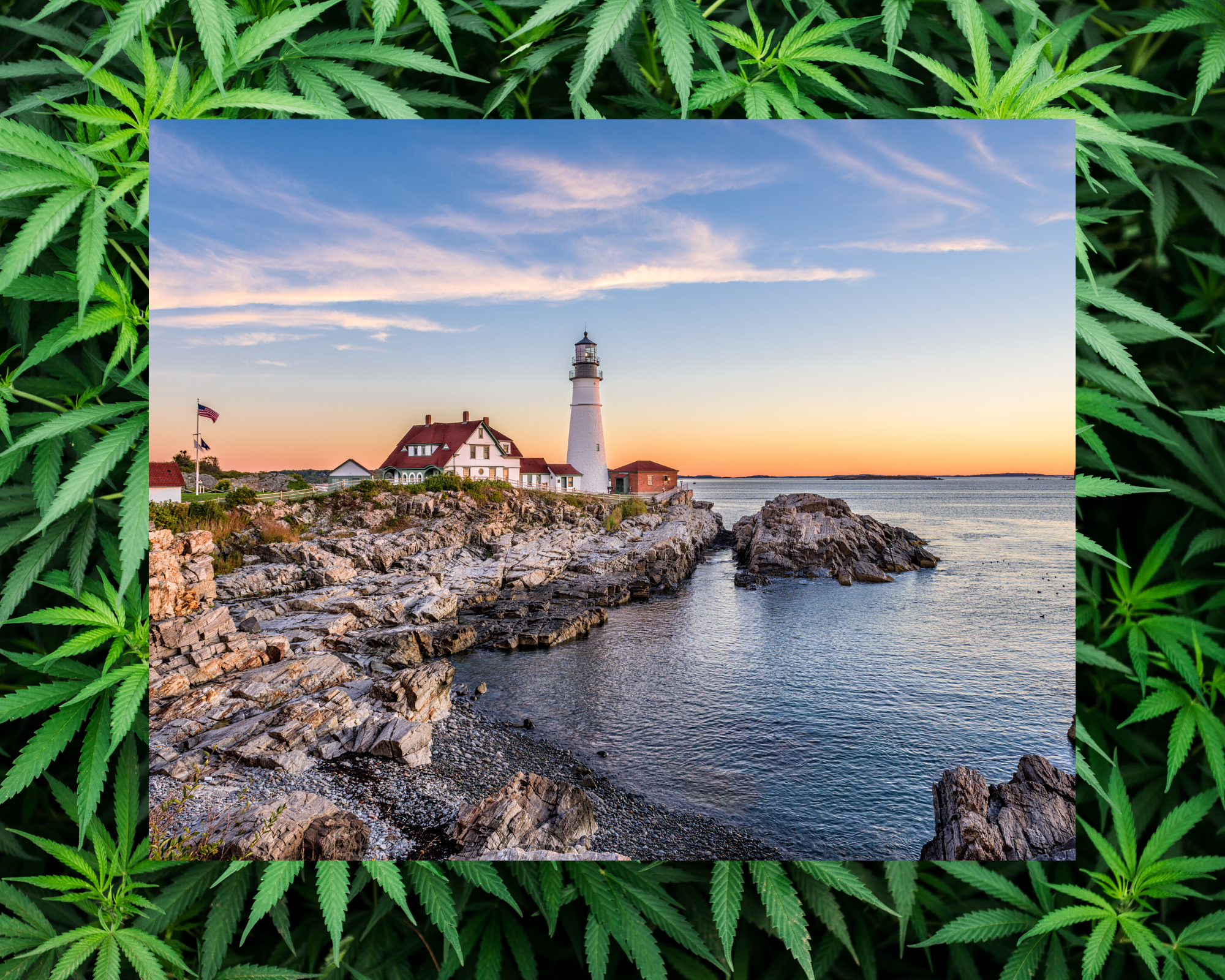 You are currently viewing Marijuana in Maine Facts