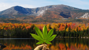 Weed In Maine